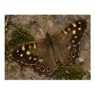 Postal Mariposa de madera manchada