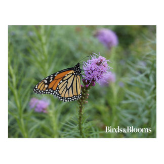Postal Mariposa de monarca