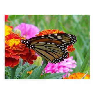 Postal Mariposa de monarca 3