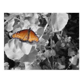 Postal Mariposa de monarca anaranjada contra blanco y