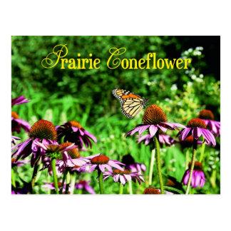 Postal Mariposa de monarca en coneflower púrpura de la