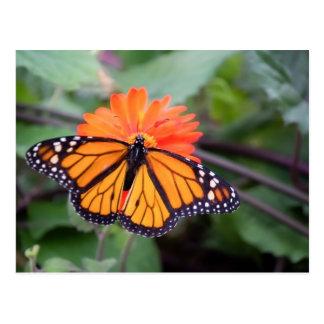 Postal Mariposa de monarca en la flor anaranjada