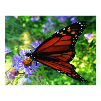 Postal Mariposa de monarca en una flor