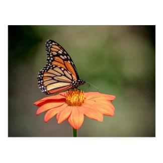 Postal Mariposa de monarca en una flor anaranjada