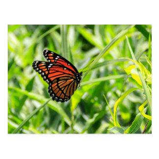 Postal Mariposa de monarca en vuelo
