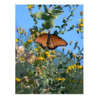 Postal Mariposa de monarca en Wildflowers amarillos