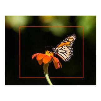 Postal Mariposa de monarca hermosa