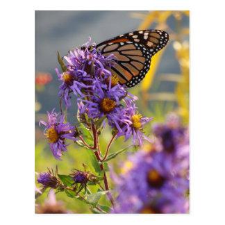 Postal Mariposa de monarca pasada
