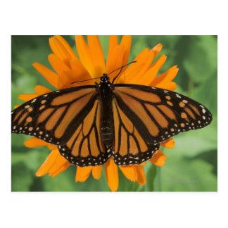 Postal Mariposa de monarca (plexippus del Danaus) en el