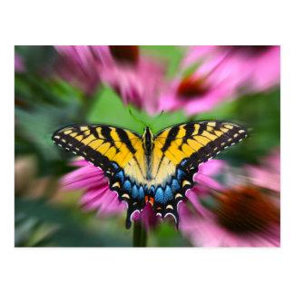 Postal Mariposa de Swallowtail