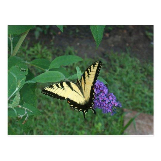 Postal Mariposa de Swallowtail del tigre