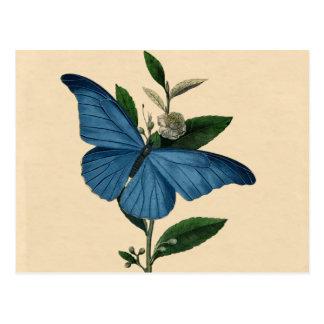 Postal Mariposa del azul del vintage
