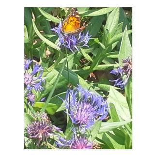 Postal Mariposa en Coneflower púrpura