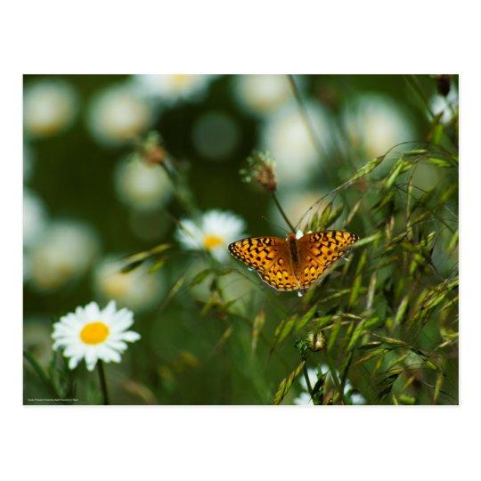 Postal Mariposa pacífica del Fritillary