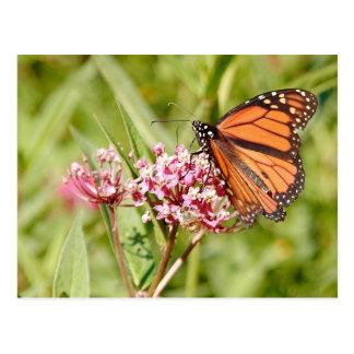 Postal Mariposa y amigo de monarca