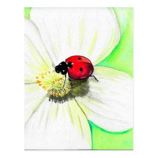 Postal Mariquita en la flor blanca