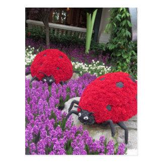 Postal Mariquita G ÚNICO de la flor del jardín de la