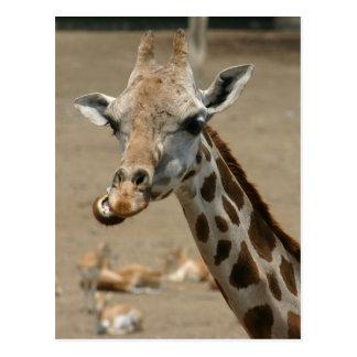 Postal Masticación de la jirafa