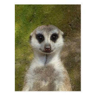Postal Meerkat
