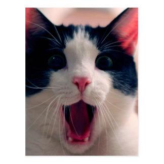 Postal Meme del gato - gato divertido - memes divertidos