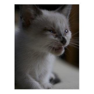 Postal Meowing del gatito