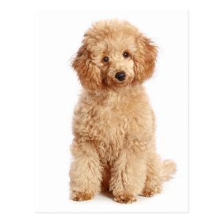 Postal miniatura del espacio en blanco del perro