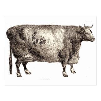 Postal Mis bóvidos del mascota (Bull o vaca)