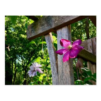 Postal mística de la flor del Clematis