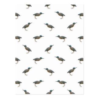 Postal Modelo exótico del adorno de los pájaros