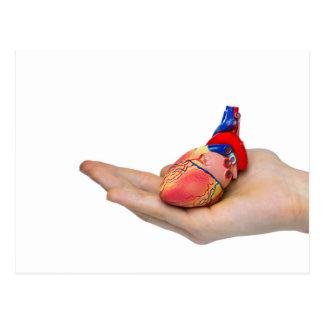 Postal Modelo humano artificial del corazón en la mano