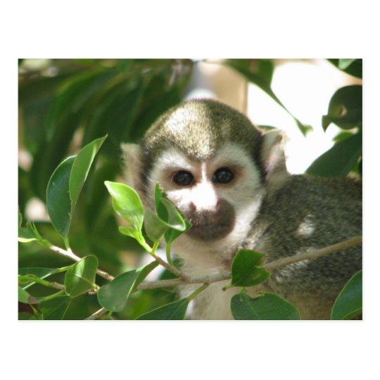 Postal Mono de ardilla común