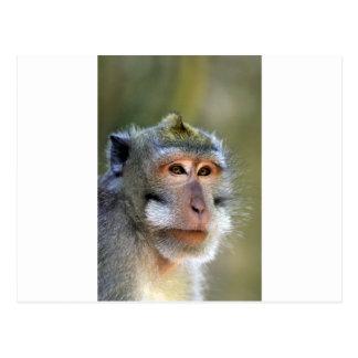 Postal Mono de macaque del Balinese