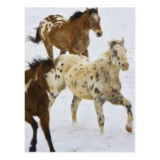 Postal Montañas del Big Horn, caballos que corren en la