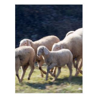 Postal multitud de ovejas