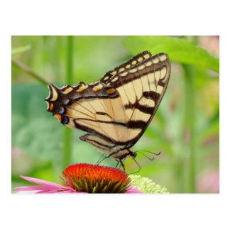 Postal Mundo de Swallowtail