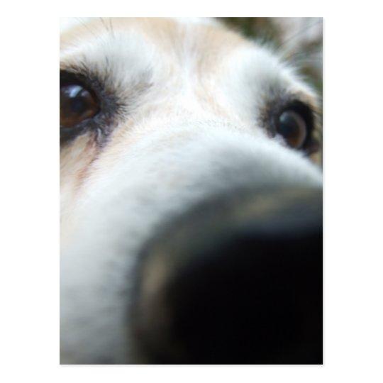 Postal Nariz divertida del beagle