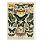 Postal Natural History Butterfly