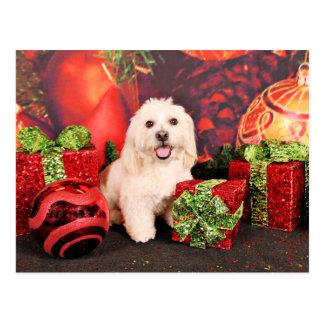 Postal Navidad - cocker - Toby, Havanese - poco T