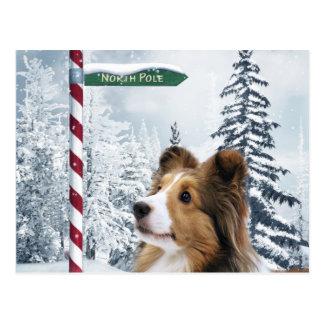 Postal Navidad de Sheltie
