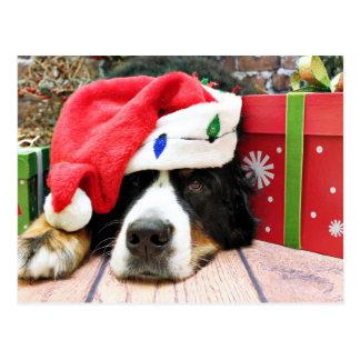 Postal Navidad - perro de montaña de Bernese - Mya