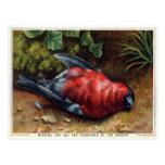 Postal Navidades de pájaros muertos de Victoria