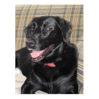 Postal negra de Labrador