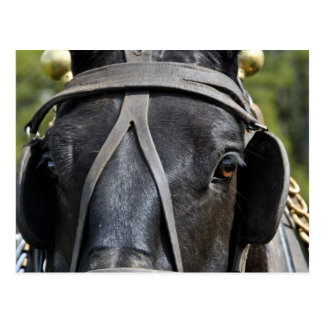 Postal negra del caballo de proyecto