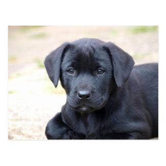 Postal negra del perrito de Labrador