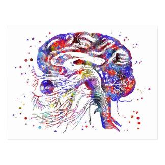 Postal Nervios craneales del cerebro, nervios craneales