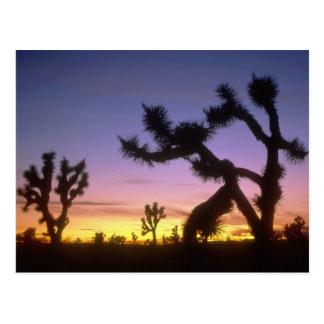 Postal NEVADA. LOS E.E.U.U. Brevifolia de la yuca de las