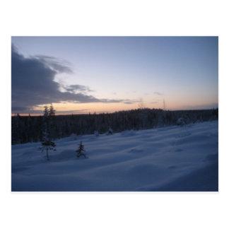 Postal Noche polar