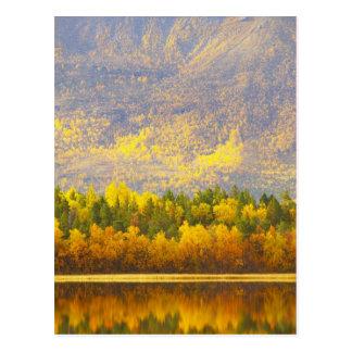 Postal Noruego Laponia en los colores del otoño