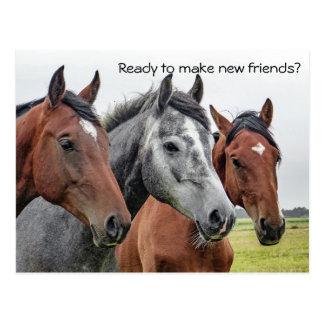 Postal Nueva recepción de los caballos de los amigos de