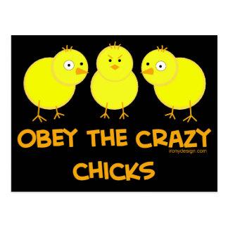 Postal Obedezca los polluelos locos